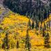 Lundy Canyon Fall Foliage