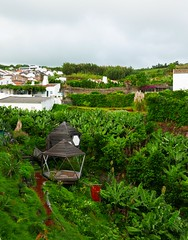 green yard (ekelly80) Tags: azores portugal sãomiguel ribeiradastainhas fall october2018 yard green flowers grass plants trees roofs view