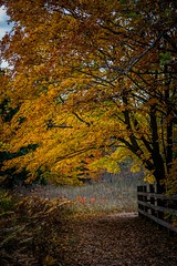 Autumn Pathway (Epperly Photographic Images) Tags: fall autumn trees walkway nature deadmans hill michigan nikon d800e