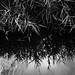 Marécages - Wetlands