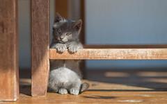 Kika (05) (Vlado Ferenčić) Tags: kitty kittens catsdogs cats vladoferencic vladimirferencic animals animalplanet nikond600 nikkor8518 zagorje klenovnik hrvatska croatia