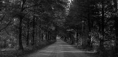 Rural Highway (Neal3K) Tags: bw blackwhite georgia jchstreetpan400 nikons335mmfilmcamera filmphotographyproject