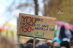 IMG_9877 (Aktiver Tierschutz Berlin (der Frank)) Tags: hamburg jungfernstieg binnenalster alster handinhandfürtierrechte hihft tierrechtsaktivistenbündnis vegan govegan mitgefühl compassion tierrechte tierschutz demo protest menschenkette animalrights animalliberation animalrightsactivist germany