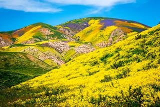 California Wildflowers Superbloom Carrizo Plain National Monument! God Spilled the Paint Desert Wildflowers Super Bloom! Elliot McGucken Fine Art Landscape & Nature Photography!