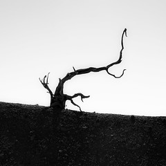 In Canyons 273 (noahbw) Tags: brycecanyon d5000 nikon utah abstract autumn blackwhite blackandwhite bw canyon decay decaying desert erosion landscape minimal minimalism monochrome natural noahbw quiet silhouette sky square still stillness tree treetrunk weathered wood