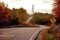 Fall Country Road 1 (Jamie Hedworth) Tags: sonydslra390 jamiehedworthphotography country road leafs brown orange toronto ontario milton canada nature trees seasons fallcolors fallcolours autumn fall