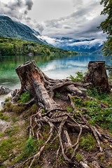 Lake Bohinj (jankech philippe) Tags: tree canon lake water travel travelphotography philippejankech clouds slovenia