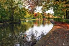 Parklife... (Explored) (Kerriemeister) Tags: park pond york rowntree trees autumn leaves ducks nikond5300