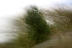 (margot 52) Tags: mosso cespuglio marioquintana vento sansogm