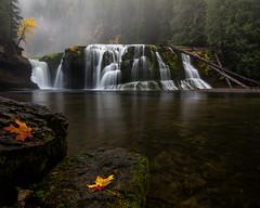 Textbook PNW fall day (Brendinni) Tags: pnw fall colors waterfall fallcolors falls washington lowerlewisfalls water trees fog leaves orange yellow rocks
