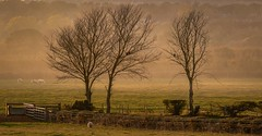 Three (John Ash Photography) Tags: xt3 fujifilm colour outdoor countryside green trees field nature yorkshire harrogate