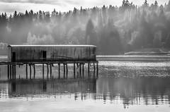Bainbridge Island, (Seattle) WA. (andrewhardyphotos) Tags: bw bainbridgeisland blackwhite mist misty monochrome nature nikond7000 outdoors reflections seattle sigma1750mmf28exdcoshsm wa water waterfront waterscape pacific