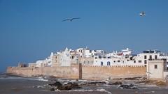 Essaouira I (pan_orama) Tags: marokko maroc morocco essaouira beach harbour seagulls fish sun color travel