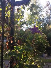 Monday morning (jouko.pohjanen) Tags: sun morning landscape nofilter finland vantaa