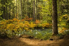 Fall color McKenzie River, Oregon (Bonnie Moreland (free images)) Tags: saariysqualitypictures autumn fall leaves color change river mckenzie oregon foliage