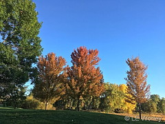 October 5, 2018 - Fall foliage starting to appear. (LE Worley)