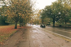 Autumn in the rain (amancalledalex) Tags: wet autumn coventry rainy urban trees grass muddy fall leaves yellow green brown