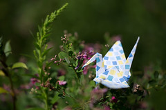Paper Crane and Lespedeza thunbergii (Eridanus 21) Tags: paper crane lespedeza thunbergiiツルとハギ thunbergii origami 折り鶴 おりがみ ツル ハギ 折り紙 おりがみ写真 origamiphotoorigami papercrane lespedezathunbergii origamiphoto 萩