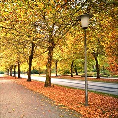October Walk (farmspeedracer) Tags: nature foliage leaf leaves autumn fall herbst 2018 october germany scenery place alley street park