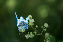 Paper Crane and White Flower (Ichigo Miyama) Tags: paper crane white flowerツルと白い花 flower origami 折り鶴 おりがみ ツル 白い花 折り紙 おりがみ写真 origamiphotoorigami papercrane whiteflower origamiphoto