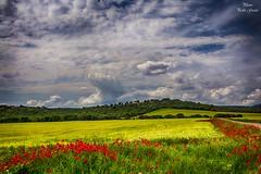 Spring colors (Peideluo) Tags: spring landscape colors clouds paisaje primavera amapolas rojo amarillo nikon cielo campo hierba flor