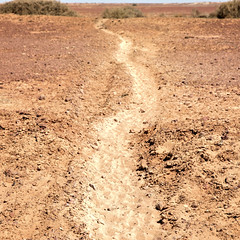 CATTLE PAD OR WALKING TRACK (16th man) Tags: birdsville birdsvilletrack queensland southaustralia canon eos eos5dmkiv lake tippipila