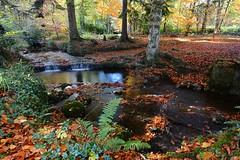 Wooded glen. (carolinejohnston2) Tags: stream waterfall rocks ferns leaves autumn colours reflection fermanagh ireland nationaltrust plants nature