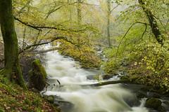 Afon Ysgethin (James Clay Photography) Tags: afonysgethin autumn coedcorsygedol cymru fog forest geotag geotagged gwynedd landscape mist river talybont wales woodland gb
