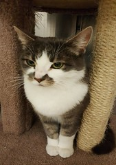 Mel - 4 year old neutered male