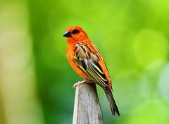 Un oiseau à Pairi Daiza (cheyennemercier) Tags: oiseau pairidaiza animal nature nikond7500 nikon zoo