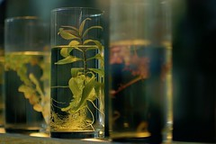 the plant (claudia 222) Tags: water plant noctilux glass