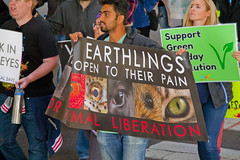 Midwest March for Animals Chicago Illinois 10-14-18 4630 (www.cemillerphotography.com) Tags: creatures pigs rabbits chickens cows meatindustry vegan plantbaseddiet food eating menu intake factoryfarming cruelty killing torture livingthing bird mammal corporateprofit greed