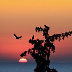 Three morning birds (Robyn Hooz) Tags: alba albero dawn sole sun birds creta ali wings fly volo mare horizon rami branches peace pace silenzio silence