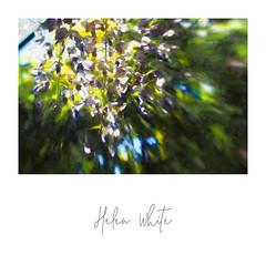 Art fabrics & prints (Helen White Photography) Tags: helenwhiteart vida fabric artprints customisableart fashion accessories floral clutchbags cashmere silk scarves contemporaryart