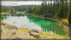 Green reflections (Jasper NP, Canada) (armxesde) Tags: pentax ricoh k3 canada kanada jasper jaspernationalpark rockymountains alberta mountain berg lake see wasser water spiegelung reflection valleyoffivelakes tree baum
