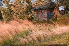 Samota (jirka.zapalka) Tags: landscape czechrepublic evening nature autumn trees building windy wind grass motion