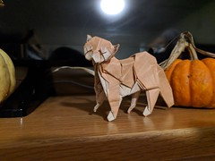 Cat-Design and Fold By Me (Eamon McCandless) Tags: origami cat paper halloween