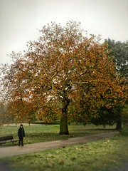 On its own - almost (marc.barrot) Tags: fall autumn landscape park boy tree uk nw3 london heath hampstead