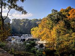The beautiful Aysgarth Falls, Leyburn, Yorkshire Dales. (Powderpuff GP) Tags: waterfall aysgarth falls yorkshire dales autumn river ure leyburn trees scenery scenic englishcountryside seasons autumnlandscape