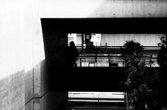 平行通路 (parallel corridors) (Dinasty_Oomae) Tags: leicaiiia leica ライカiiia ライカ 白黒写真 白黒 monochrome blackandwhite blackwhite bw outdoor 東京都 東京 tokyo 台東区 上野 taitoku ueno 上野公園 uenopark 影 shadow