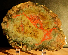 colorful Agatized Coprolite, fossilized dino poop (subarcticmike) Tags: collection subarcticmike dinopoo coprolite jurassic morrison formation educational agate geology 6ws sixwordstory scat scatology trackingdinosaurs poop dumpling dinosaur dinopatty