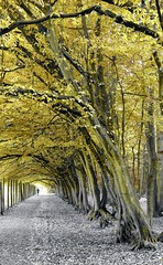 (farmspeedracer) Tags: nature october autumn fall tree park forest herbst 2016 yellow germany