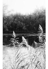 * (PattyK.) Tags: snapseed nikond3100 ioannina giannena giannina epirus ipiros balkans hellas ellada greece grecia griechenland whereilive 2018 europe europeanunion ιωάννινα γιάννενα ηπόλημου ήπειροσ ελλάδα βαλκάνια ευρώπη λίμνη παμβώτιδα λίμνηπαμβώτιδα λίμνηιωαννίνων παραλίμνιο μώλοσ νερό φύση άσπροκαιμαύρο blackandwhite monochrome lake pamvotida lakepamvotida ioanninalake lakeside lakefront waterfront bythelake autumn october