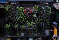 plants (carlywsy) Tags: canon 77d sigma 1750mm f28 plants children manila philippine