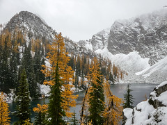 fall collides with winter (matty whyte) Tags: bluelake larch pnw pacificnorthwest larches fall winter