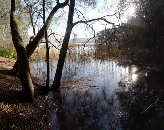 Afternoon at Narrabeen Lake