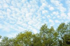 Ciel moucheté (patoche21) Tags: arbre bourgogne bourgognefranchecomte ciel cotedor chevignystsauveur europe flore france nature paysage plante minimalisme nuage burgundy patrickbouchenard forest landscape scenery autumn fall atmosphere sky cloud tree minimalism