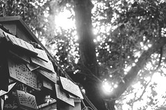 絵馬と木漏れ日 (MRodriguezS) Tags: japan shrine blackwhite sky light tree