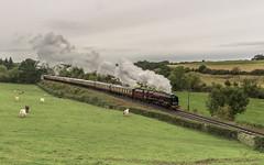Working Duchess (4486Merlin) Tags: duchessofsutherland semi 6233 england europe exlms heritagerailways lms8pduchess midlands railways severnvalleyrailway steam transport unitedkingdom littlerock shropshire gbr svrautumnsteamgala