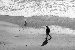 Time for a walk: Dawlish, Devon, UK (Dai Lygad) Tags: walking dogwalker flickr blackandwhite bw photos photographs images pictures uk england dawlish geotagged stock jeremysegrott forwebsite forwebpage forblog forpowerpoint forpresentation
